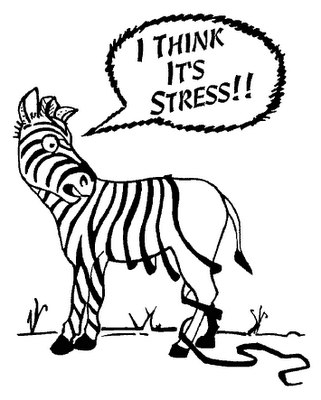 Zebra Stressed Out Koozies Clip Art Animal Design Zebra Stress