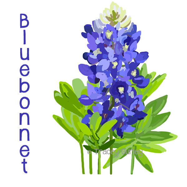 Bluebonnet cliparts. Bluebonn