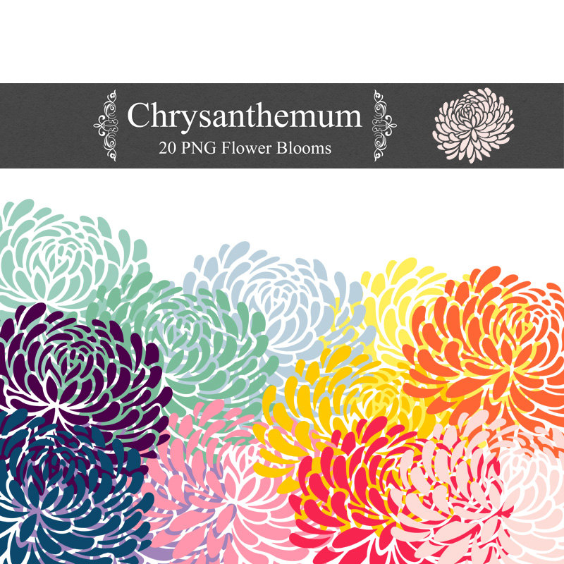 - Chrysanthemum Clip Art