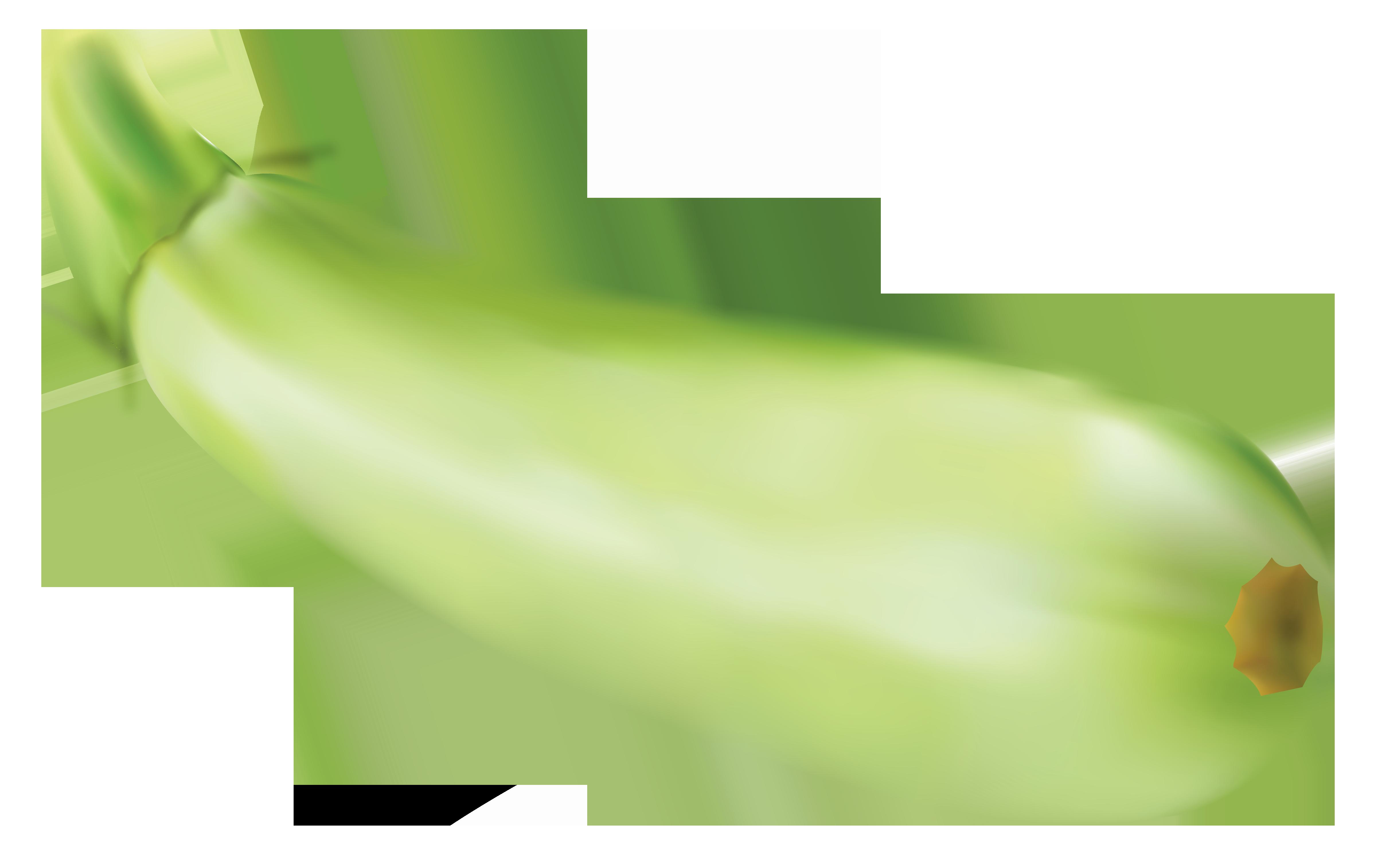 Zucchini clipart clipartall