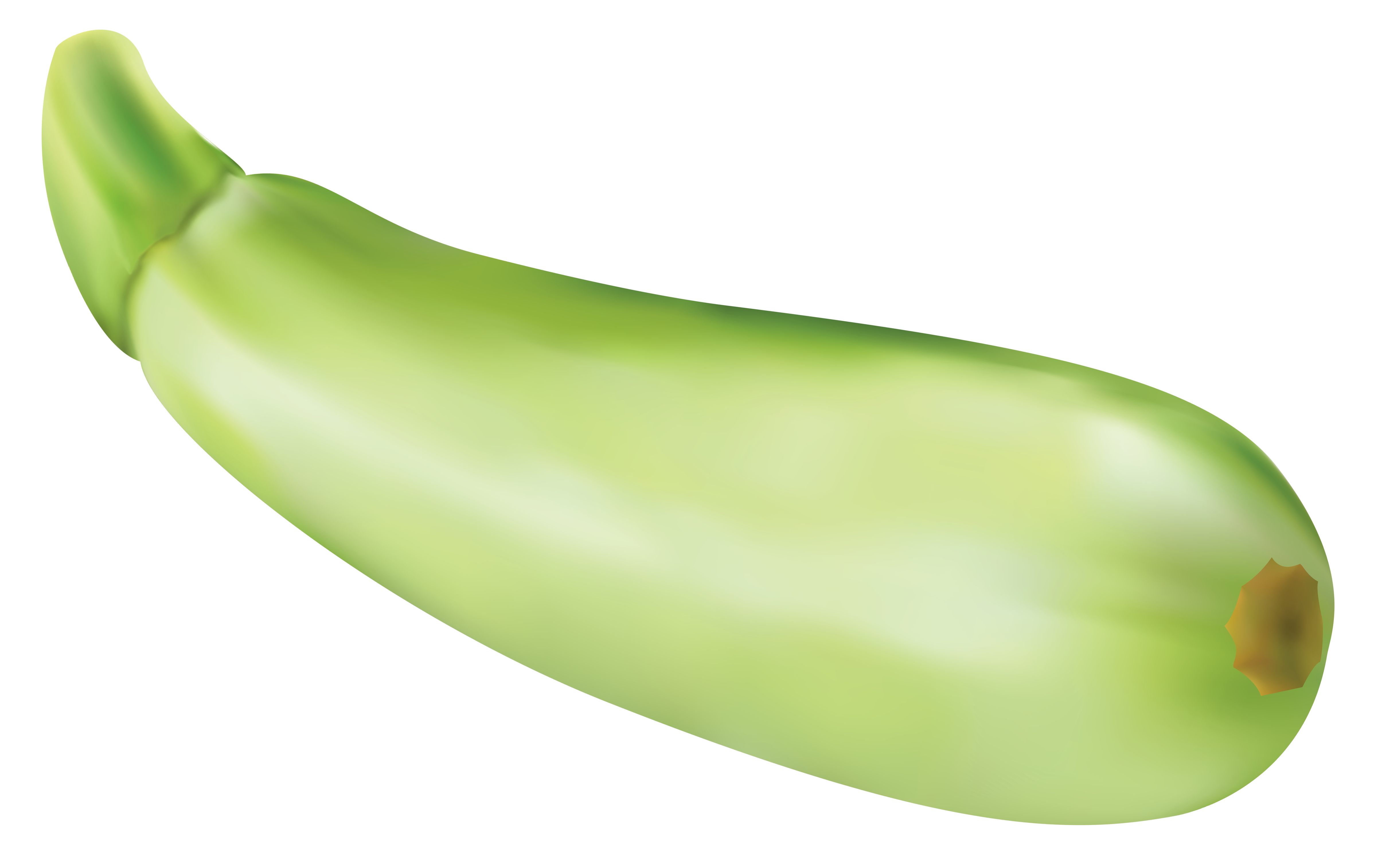 Zucchini clipart clipartall-Zucchini clipart clipartall-12