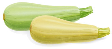 Zucchini clipart id clipart pictures